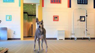 老犬ホームWANCOTT 介護風景フリータイム
