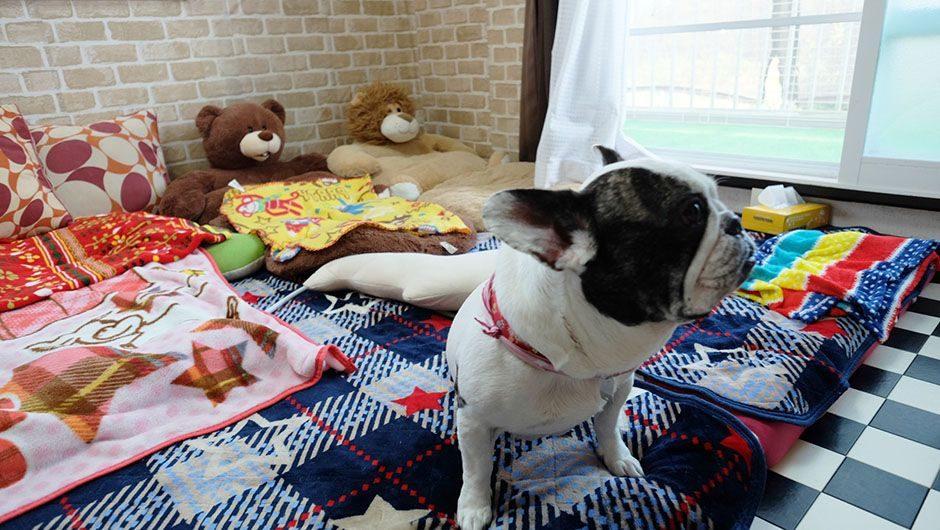 老犬ホームポエム ワンちゃんのお部屋