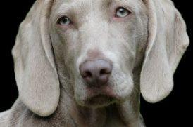 犬のイメージ画像