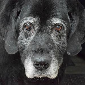 老犬のイメージ画像