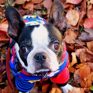 落ち葉の上に座る犬