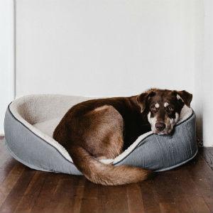 クッションで寝る老犬