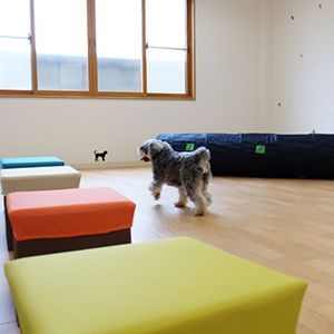 老犬ホームぬち・どぅ・たから 運動スペース