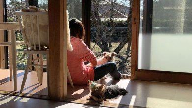 老犬ホームリリモナハウス_介護風景