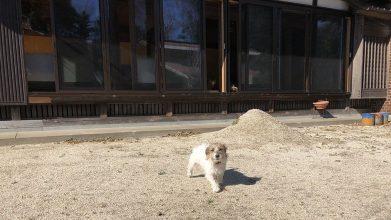 老犬ホームリリモナハウス_お庭