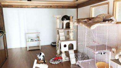 老犬ホームリリモナハウス_猫のお部屋