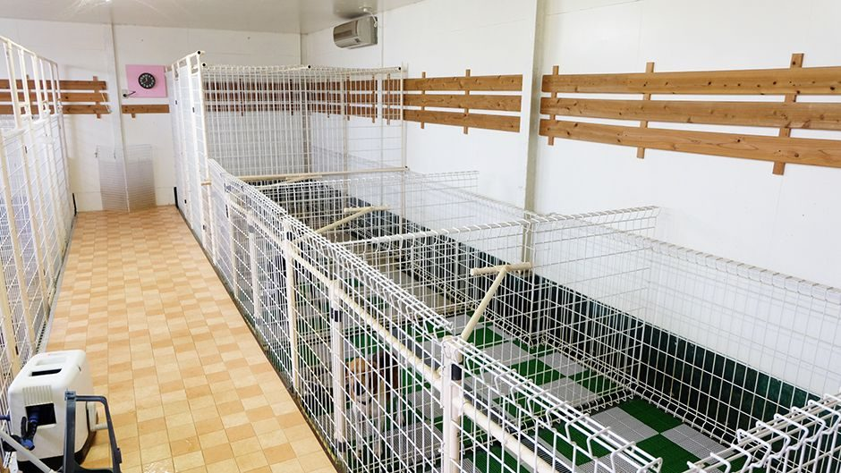 老犬ホームワンワン・パラダイス 犬舎内観