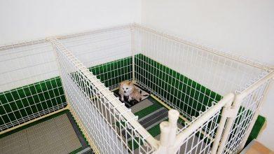 老犬ホームワンワン・パラダイス ワンちゃんのお部屋