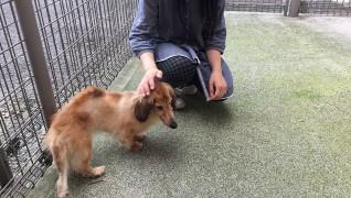 コビー動物病院 老犬・老猫ホーム施設内広場