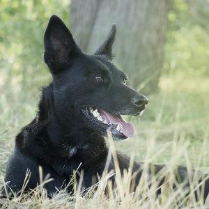 黒い犬のイメージ画像