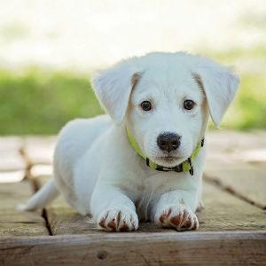 子犬のイメージ画像