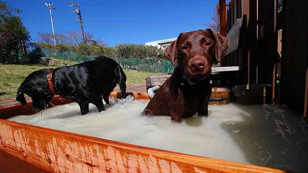 箱根強羅老犬のおうち 入浴風景