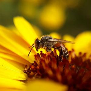 ハチのイメージ画像