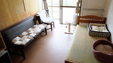 老犬ホームD&C ワンちゃん・ネコちゃんのお部屋