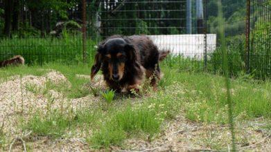 老犬ホームD&C ドッグラン