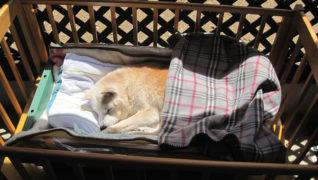 犬のケアハウスうらら お昼寝