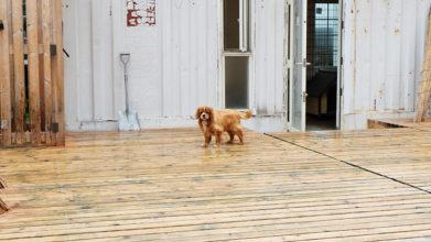 老犬ホームドッグハウスダディー_ウッドデッキ