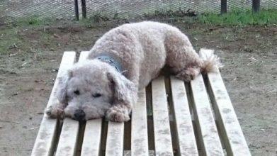 老犬ホーム花園牧場 ドッグラン