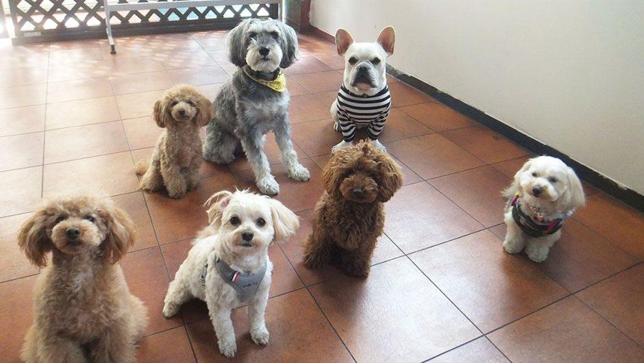 Queue(クゥー) 仲間の愛犬たち