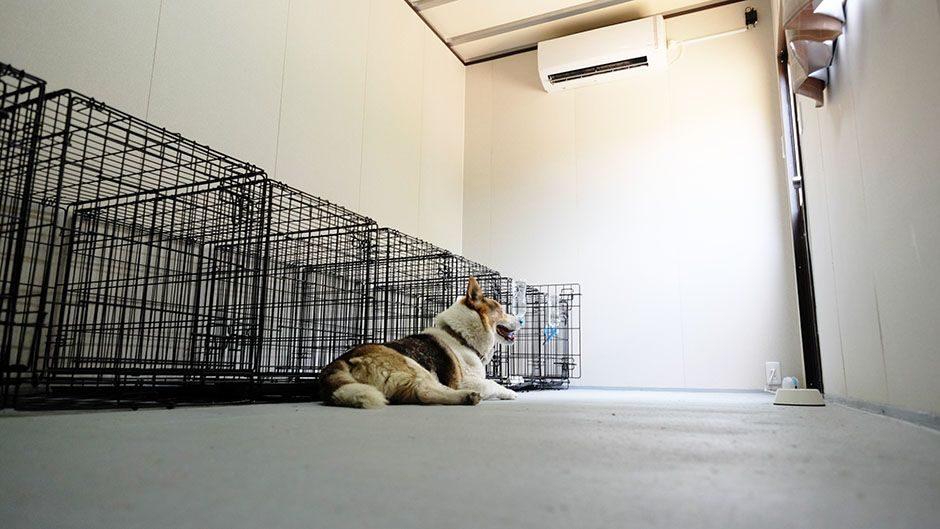 老犬ホームこころはうす ワンちゃんのお部屋
