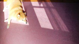 老犬ホーム・KOMUGI 介護風景日向ぼっこ