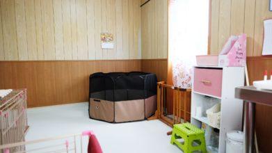 老犬ホーム・KOMUGI ワンちゃんのお部屋