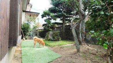 老犬ホーム・KOMUGI ドッグラン