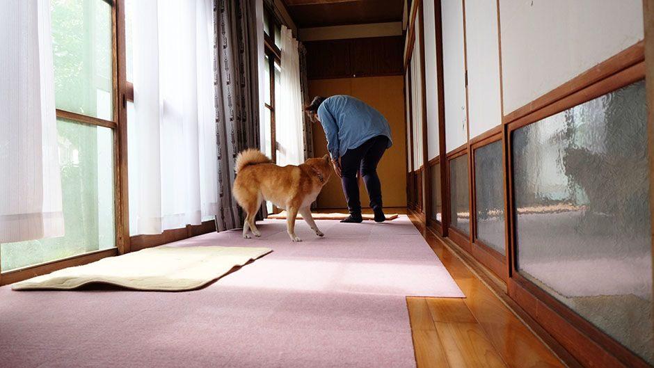 老犬ホーム・KOMUGI 施設内観 縁側