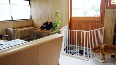 老犬ホーム・KOMUGI 施設内観