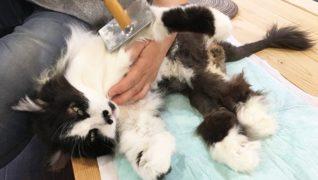 高齢猫専門移住受入施設 ちびママの家_健康チェック