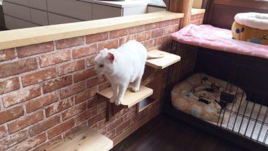 高齢猫専門移住受入施設 ちびママの家_キャットウォーク