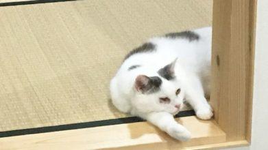 高齢猫専門移住受入施設 ちびママの家_介護風景