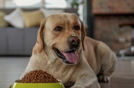 食事する老犬