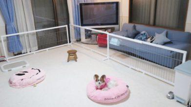 老犬ホーム ALOHA MIMITAN 施設内観