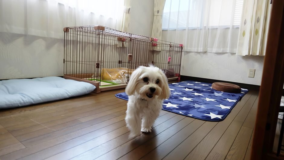 家庭的老犬介護施設SmileHome_施設内観