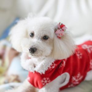 老犬とクリスマス