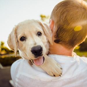 抱かれる老犬