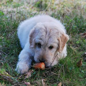 老犬の食欲