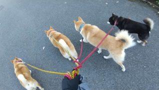 老犬ホームTOP_栃木犬舎_介護風景(散歩)