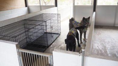 老犬ホームTOP 栃木犬舎_ワンちゃんのお部屋