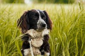 草原にいる老犬