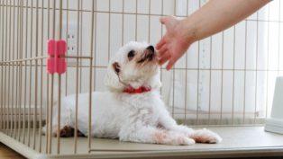 家庭的老犬介護施設_Smilehome(スマイルホーム)_介護風景