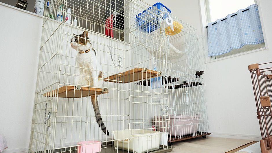 家庭的老犬介護施設_Smilehome(スマイルホーム)_猫ちゃんのお部屋
