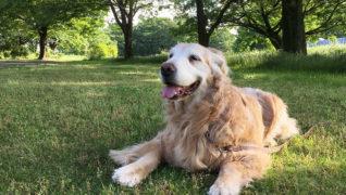 老犬サポートひだまり_お散歩風景