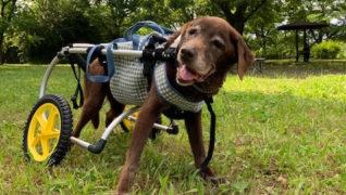 老犬サポートひだまり_お散歩の様子