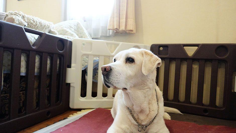 老犬サポートひだまり_介護の様子