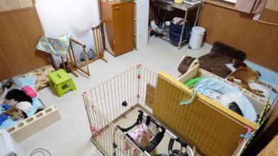 老犬ホーム・KOMUGI_ワンちゃんのお部屋