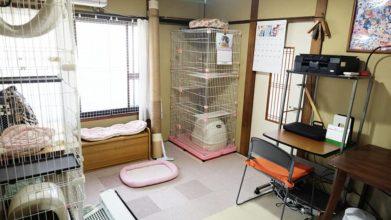 老犬ホーム・KOMUGI_猫ちゃんのお部屋