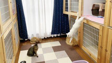 だいあーど富士店_猫ちゃんのお部屋