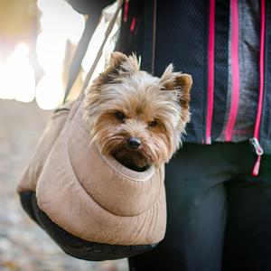 キャリーバッグに入る老犬